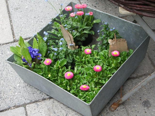 花屋さんの店先にあった寄せ植え