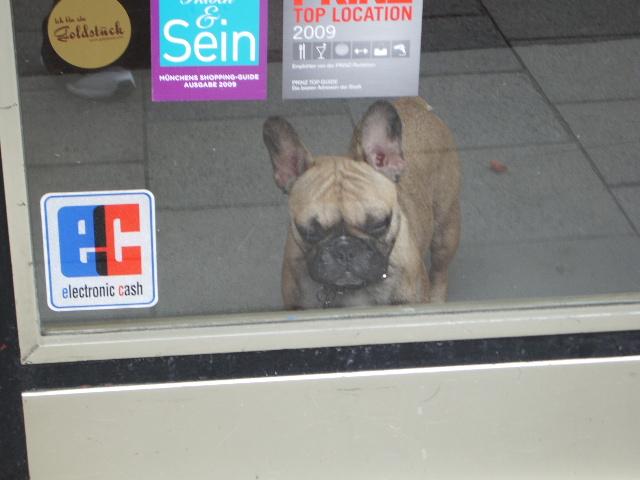 どこぞの店の看板犬
